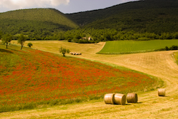 field poppies in Umbria are a typical subject on our photography tours
